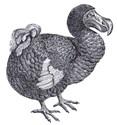 Dodo bird Clothing