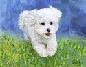 Bichon Note Cards (10 Pack)
