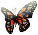 Beautiful butterfly nature colorful black e Rectangle