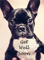 Get well soon dog postcard Postcards