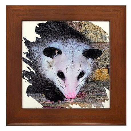 Virginia Opossum Framed Tile
