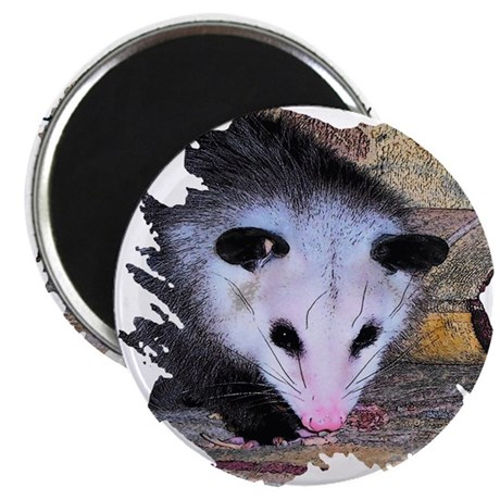 "Virginia Opossum 2.25"" Magnet (100 pack)"