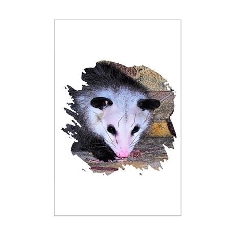 Virginia Opossum Mini Poster Print