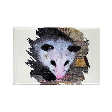 Virginia Opossum Rectangle Magnet (100 pack)