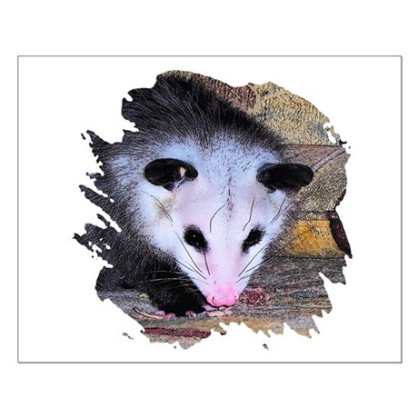 Virginia Opossum Small Poster