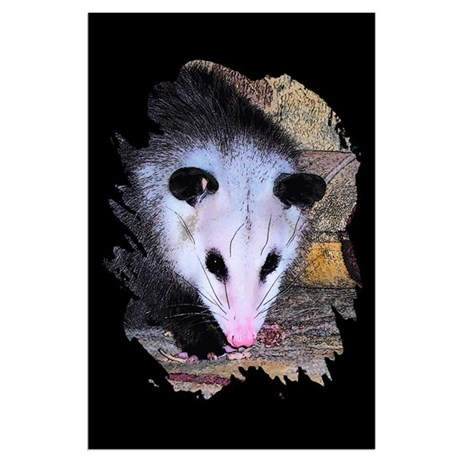 Virginia Opossum Large Poster