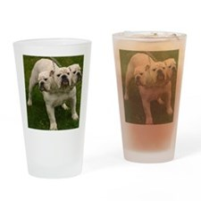 3 headed bulldog Drinking Glass