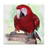 Greenwing Macaw Tile Coaster