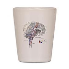 Pathways of the Brain Shot Glass
