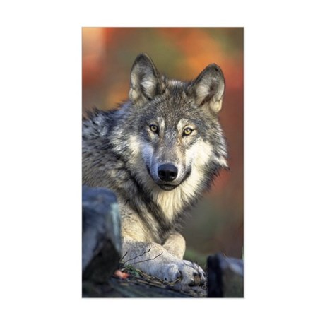 Gray Wolf Rectangle Sticker