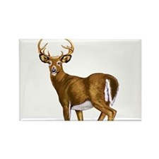 White Tail Deer Buck Rectangle Magnet