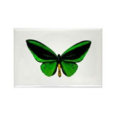 green butterfly Magnets