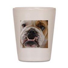 bulldog Shot Glass