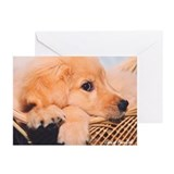 "Golden Retriever ""Puppy Jesse"" - 6 Cards"