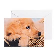 "Golden Retriever ""Puppy Jesse"" - 6 Cards"