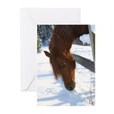Arabian horses Greeting Cards (10 Pack)
