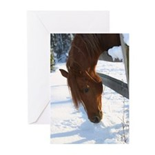 Arabian stallion in snow Greeting Cards (10 Pk)