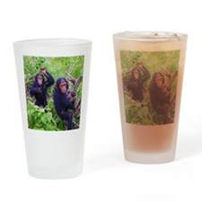 Two Chimps Playing Drinking Glass