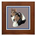 Smooth and Rough Collie Framed Tile