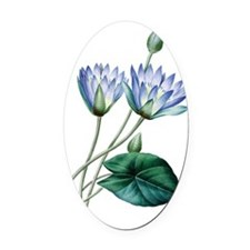 Water lilies Oval Car Magnet