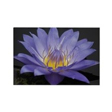 Water Lily 8 Rectangle Magnet