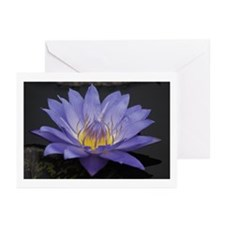Water Lily 8 Greeting Cards (Pk of 10)
