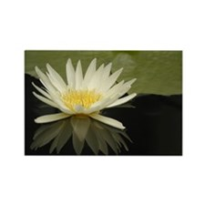 Water Lily 18 Rectangle Magnet