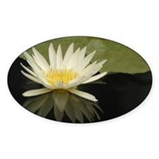 Water Lily 18 Oval Decal