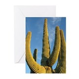 Saguaro National Park v2 Greeting Cards (Package o