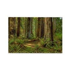 redwoods Rectangle Magnet