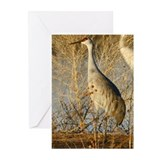 Sandhill Crane Greeting Cards (Pk of 10)