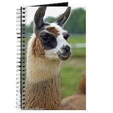 llama2_iphone3G Journal