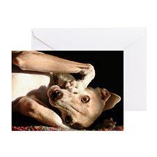 Italian Greyhound Cards Smunch