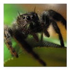 """Jumping Spider Square Car Magnet 3"""" x 3"""""""