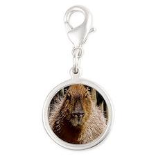 (15) Capybara Staring Silver Round Charm