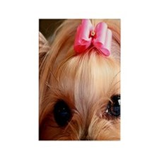 Yorkie 3G Rectangle Magnet