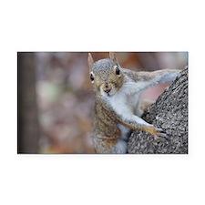 Juvenile Squirrel Up Aree Rectangle Car Magnet