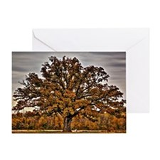 fullsize autumn oak Greeting Card