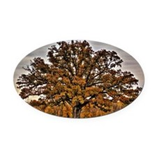 fullsize autumn oak Oval Car Magnet