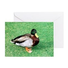 Duck Note Card Greeting Card