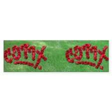 CO77X 66 roses garden Bumper Sticker
