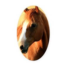 horse,1 Portrait Oval Car Magnet