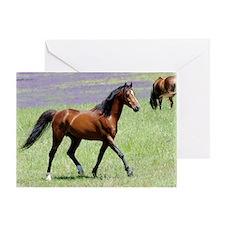 Stallion 9Y894D-053 Greeting Card