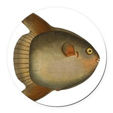 Mola Mola Giant Sunfish Round Car Magnet