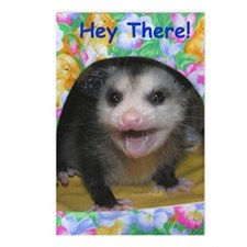Possum Birthday Card - He Postcards (Package of 8)