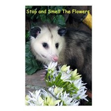 Possum Birthday Card - Fl Postcards (Package of 8)