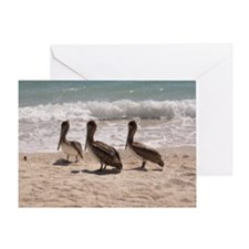 Pelicans in Florida Greeting Card