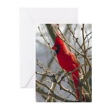 Unique Northern cardinal Greeting Cards (Pk of 10)