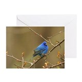 Indigo Bunting Greeting Cards (Pk of 10)