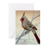 Pyrrhuloxia Greeting Cards (Pk of 10)